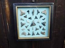 Fossil Shark Teeth