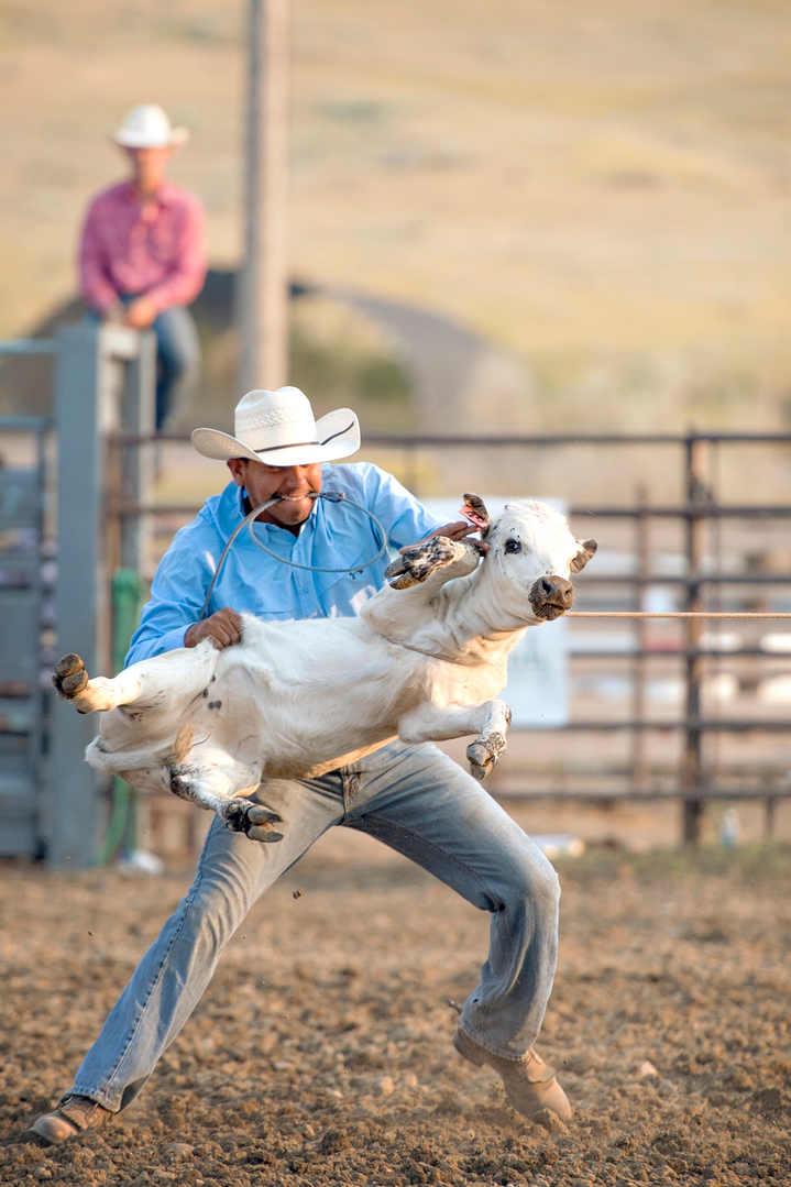 cowthrowing.jpg