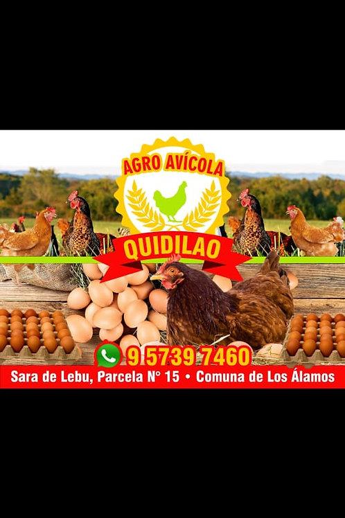 Agroavícola Quidilao
