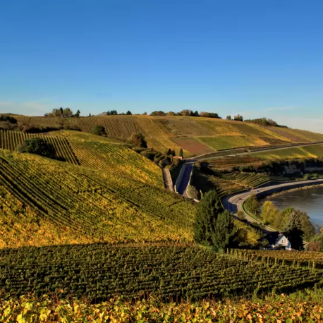Vallée de la Moselle luxembourgeoise : Le vin sans les bouchons...