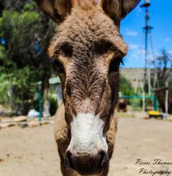 donkey CU.jpg