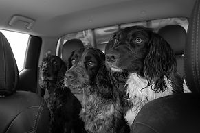 3 dogs in car.jpg