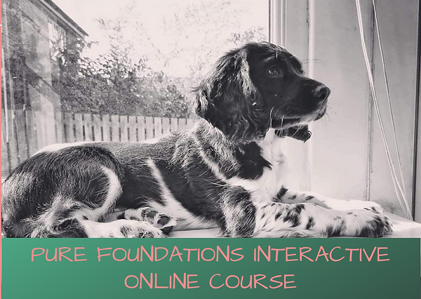 Pure Foundations Interactive Online Cour