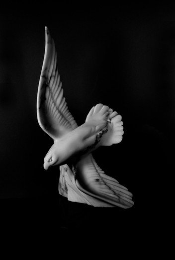 marblehawk1.jpg