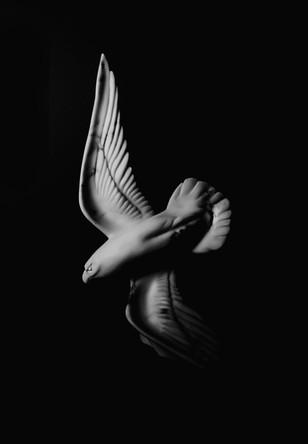 marblehawk2.jpg