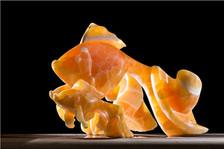 orangeFish.jpg