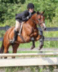 horse42.jpg
