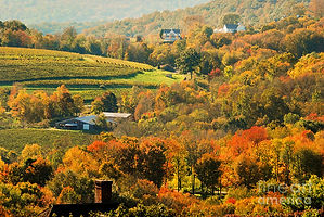 Autumn-litchfield-hills.jpg