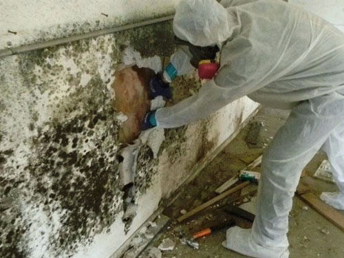 water-flood-damage-mold-removal2.jpg