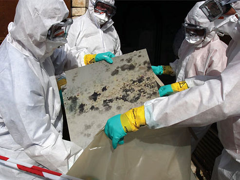 water-damage-mold-removal.jpg