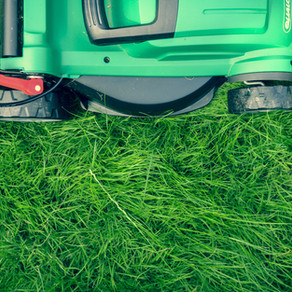 Lawn care may require a different approach this year after extreme freeze