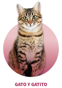 2-GATO-02.png