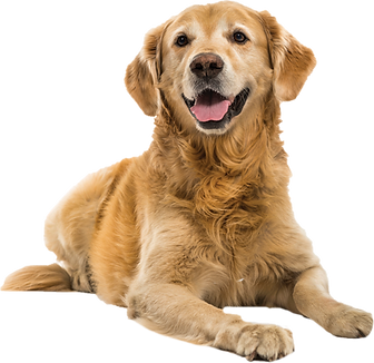 dog_PNG50348.png