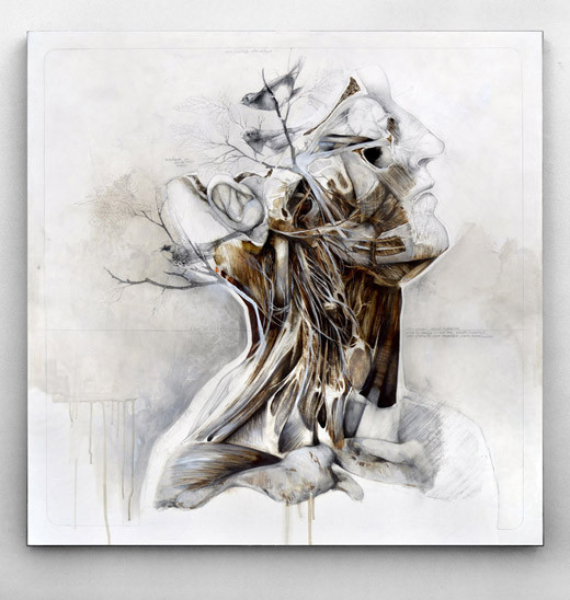Nunzio Paci Anatomical Work2