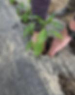 plantation8.jpg