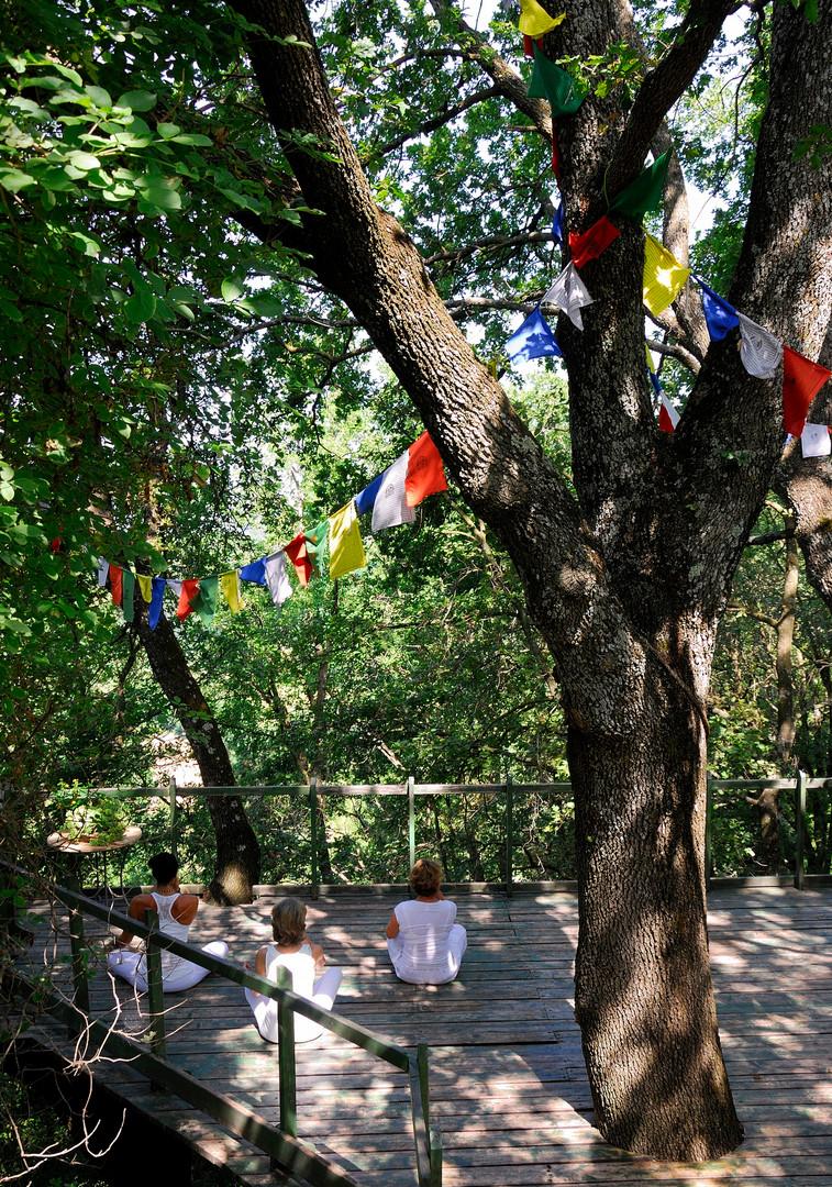 Meditation haven below the trees