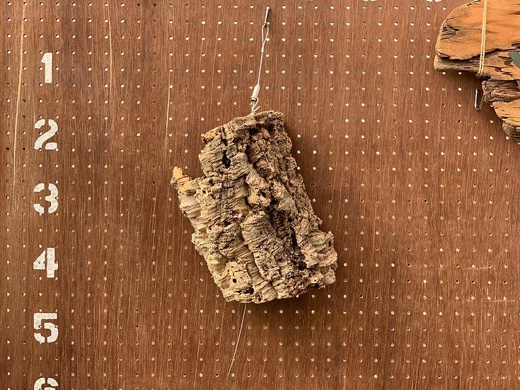 コルク樹皮⑦