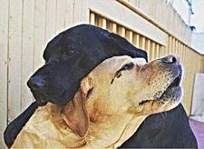 Clinic Pets