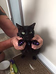 Kitty Nails