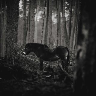 Ronja Erdmann-5877-2.jpg