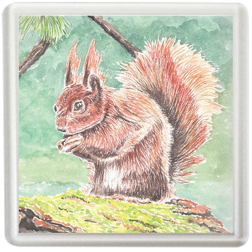 Red Squirrel - Coaster