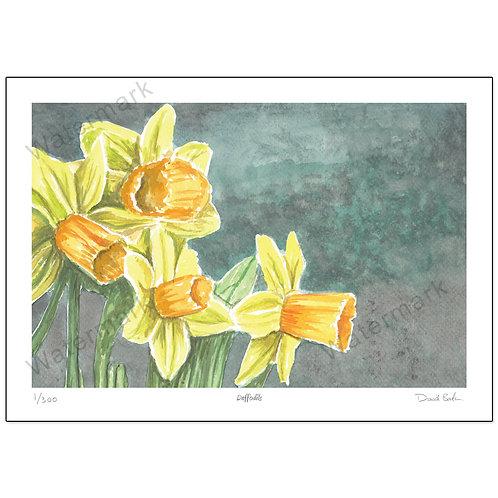 Daffodils, Print A4