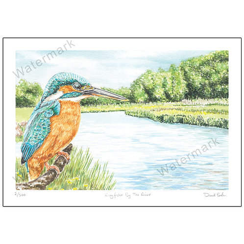 Kingfisher By The River, Print A4 or A3