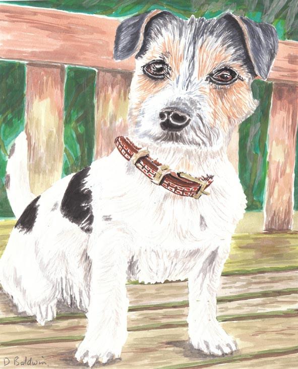 Dog Portrait Terrier