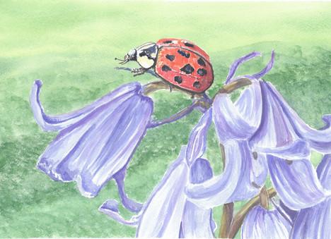 Ladybird On A Bluebell