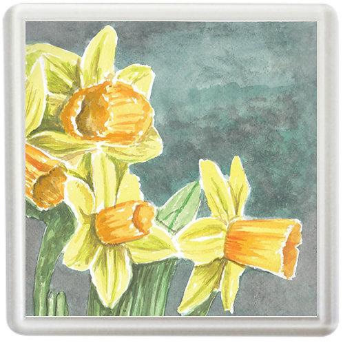 Daffodils - Coaster