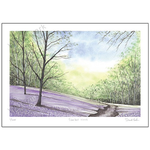 Bluebell Wood Study 2, Print A4 or A3