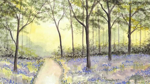 Bluebell Wood Study 3