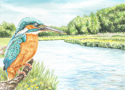 Kingfisher By A Riverbank