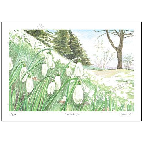 Snowdrops, Print A4
