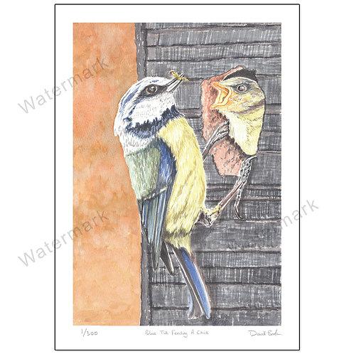 Blue Tit Feeding A Chick, Print A4 or A3