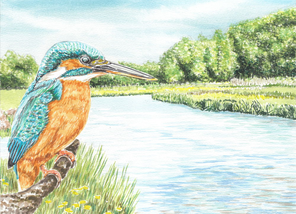 Kingfisher By The Riverbank