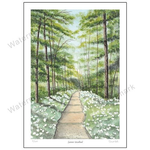 Summer Woodland, Limited Edition Print A4 or A3
