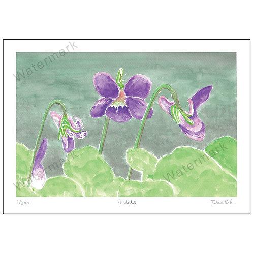 Violets, Print A4