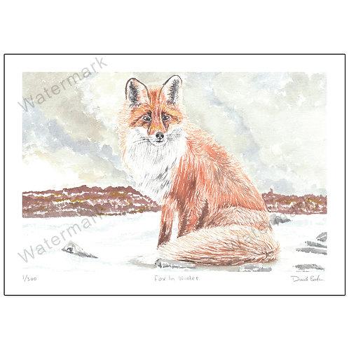 Fox In Winter, Print A4