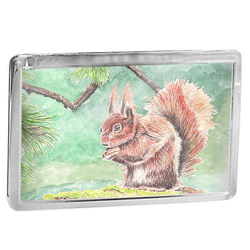Red Squirrel- Fridge Magnet