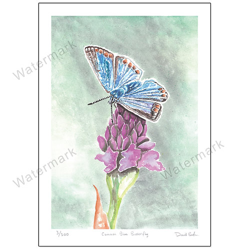 Common Blue Butterfly, Print A4 or A3