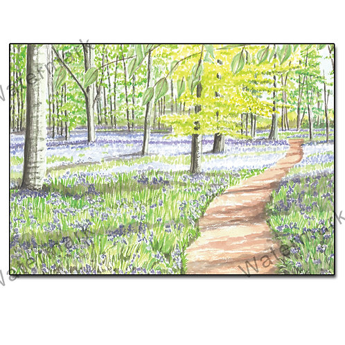 Bluebell Wood - Pack 5 of Greetings Card Landscape, A6