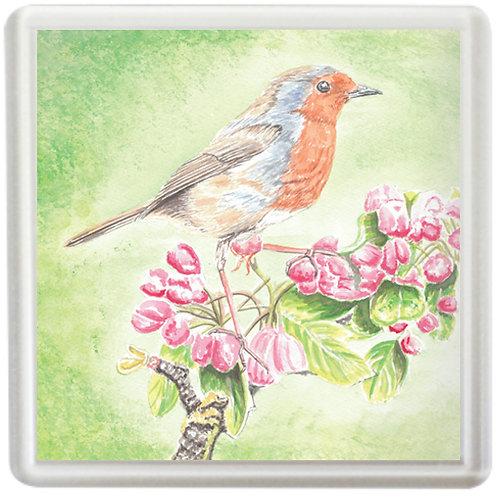 Robin On Apple Blossom - Coaster