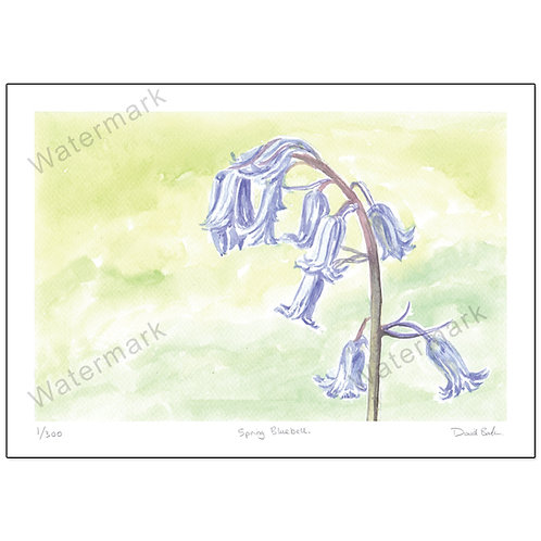 Spring Bluebell, Print A4