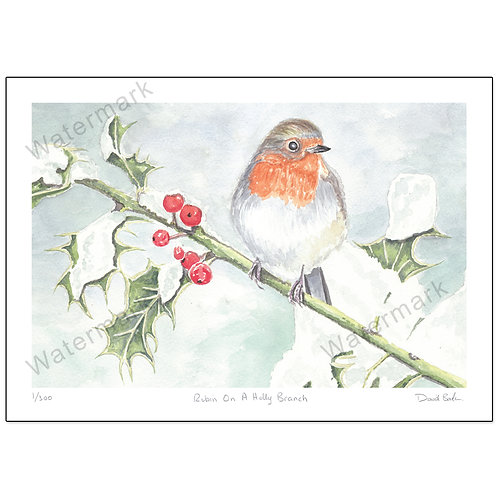 Robin On A Holly Branch - Limited Edition,  Print A4 or A3
