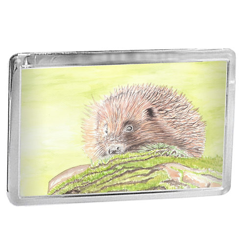 Hedgehog - Fridge Magnet