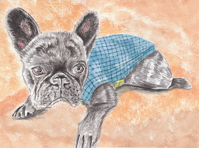 Dog Portrait 10