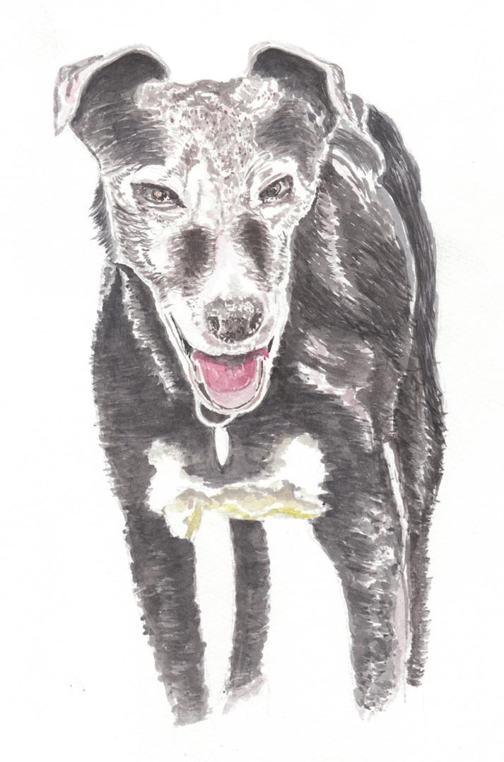 Dog Portrait 5