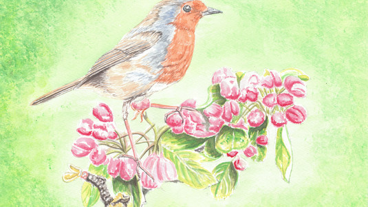 Robin On Apple Blossom