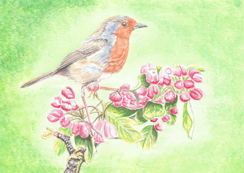 Robin On Apple Blossom